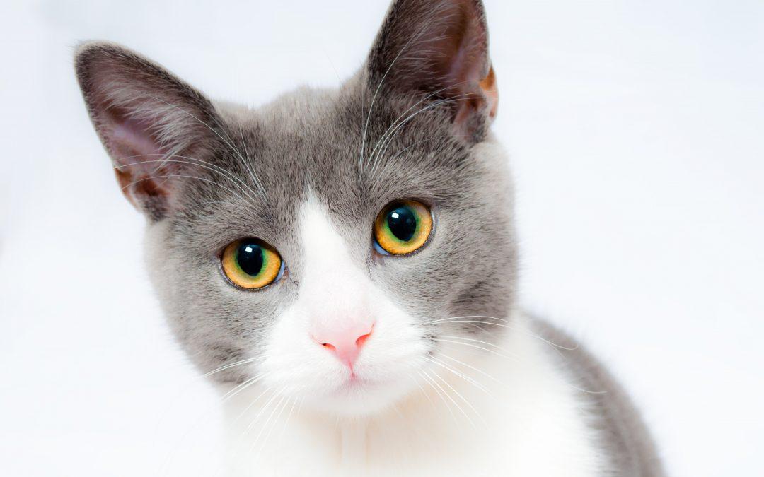 Find en kattelem til din kat