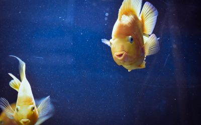 Giv dine akvariefisk de bedste forhold